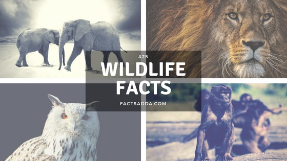 25 Amazing facts about animals and birds