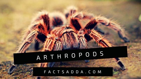 Arthropods - Facts Adda