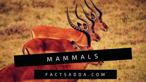 Mammals  - amazing facts about animals