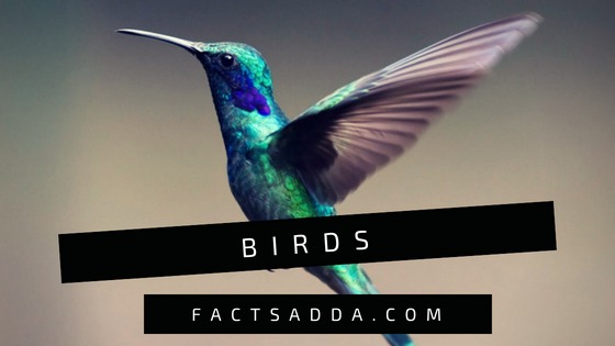 Birds - amazing facts about birds