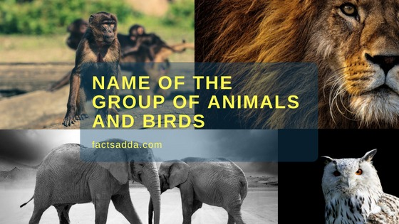 Name of the group of the animals and birds