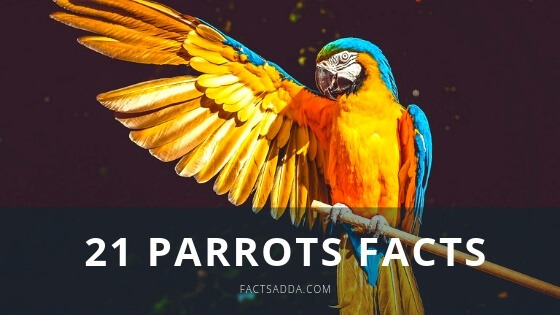 Amazing Parrot Facts