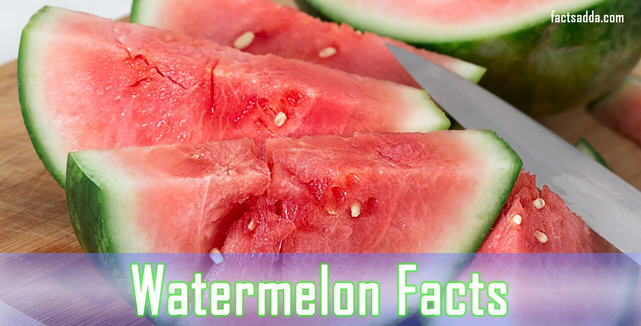 Watermelon Facts and Benefits