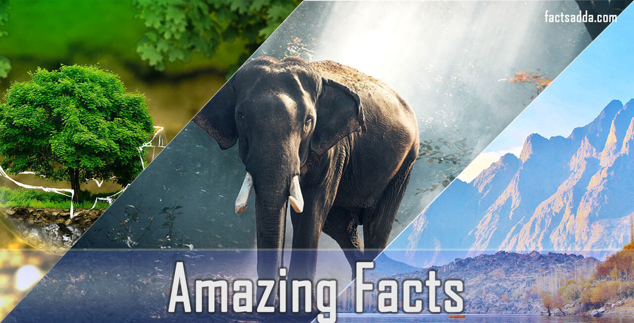 Amazing facts of the world
