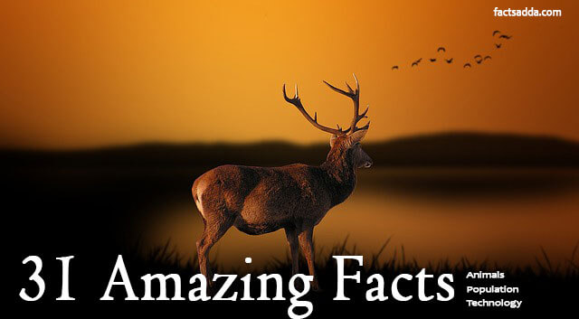 31 Amazing Facts